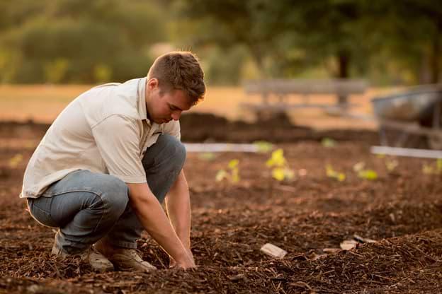 a gardener during a soft landscaping job