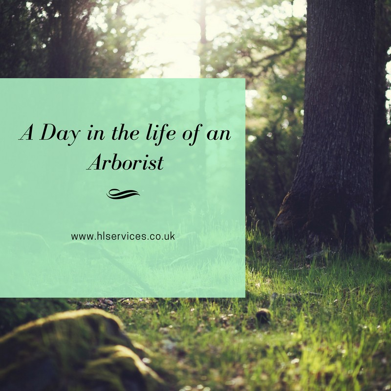A Day in the life of an Arborist