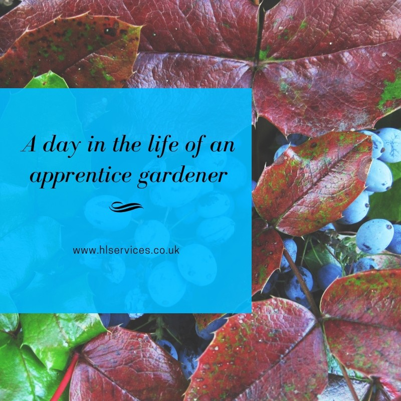 A day in the life of an apprentice gardener