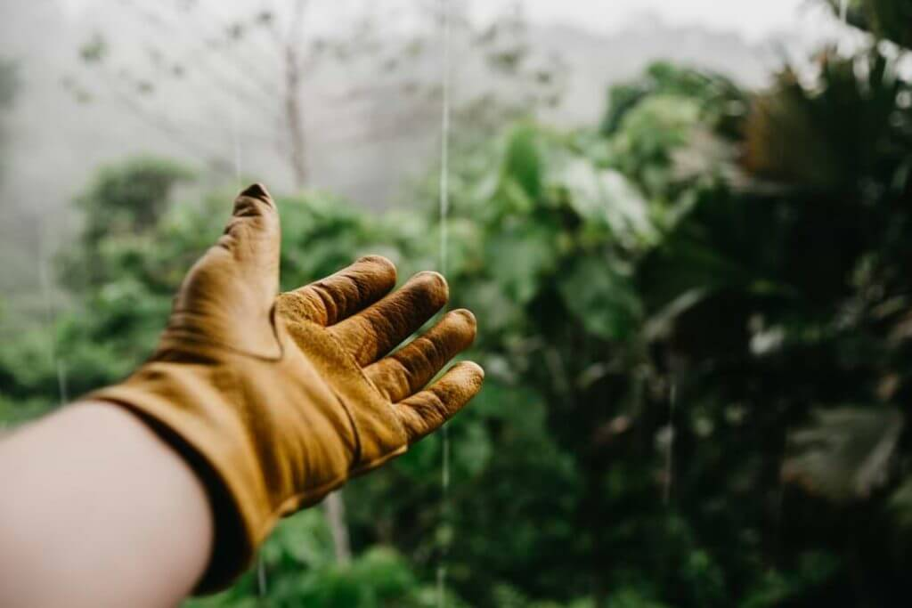 the glove of a gardener