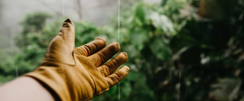 the glove of a gardener